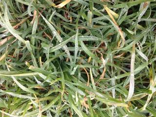 herbe pluie
