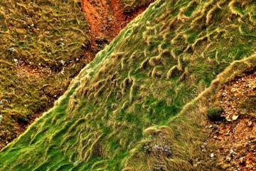 Herbes balayées par les vents sur les falaises d'Etretat en HDR