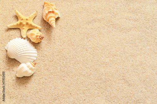 Seashells on sand - 79554111