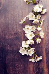 Blooming apple tree in spring. top view