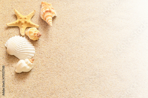 Fototapeta Seashells and sand