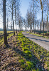 Leafless trees at both sides of a country road