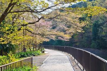 東山自然緑地ジョギングコース