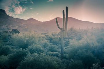 Desert landscape - rain falling - Phoenix, Arizona