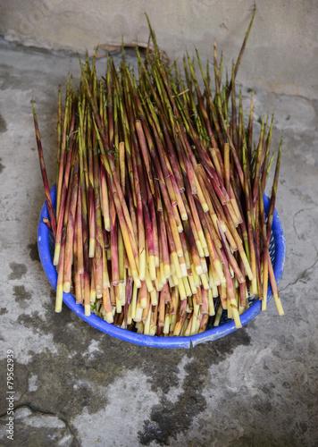 In de dag Bamboo Bamboo shoots