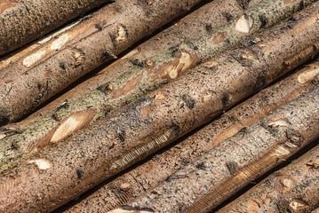 Holzstämme im Sägewerk
