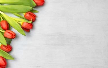 Tulpen auf weißem Holz, Frühling, Rahmen, Textfreiraum
