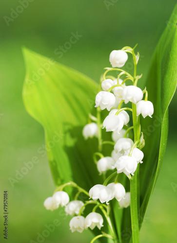 Staande foto Lelietje van dalen Maiglöckchen, Lily of the Valley, copy space