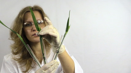 Research of genetically modified plants