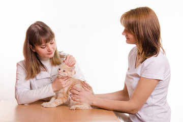 Veterinarian examines cat ears
