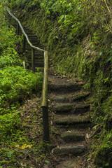Trail in Papallacta cloud forest,Papallacta region, Ecuador