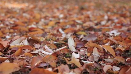 Autumn   landscape with leaves close up. Slider shot
