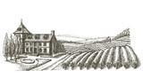 vineyard vector logo design template. village or farm icon.