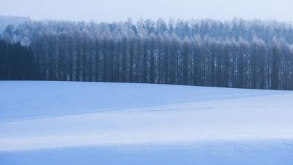 美瑛の丘と林