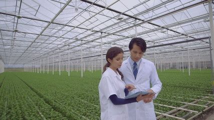 Man and woman using digital tablet in greenhouse
