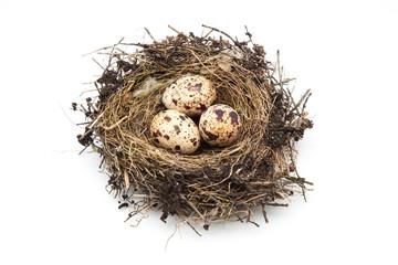 nido con tres huevos