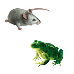 Gray mouse, Green frog, spotted toad isolated on white