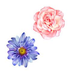 Blue Mona Lisa flower, Pink rose, Spring bloom