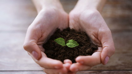 close up of woman hands holding soil with sprout
