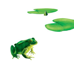 Green frog with spots, spotted toad, Water lily (lotus) leaves,