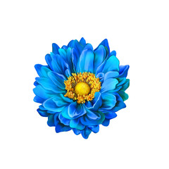 Colorful Blue Mona Lisa flower, Spring bloom