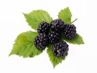 blueberry fruits on leaf