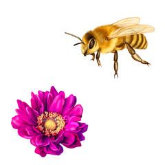 Pretty bee, Pink Mona Lisa flower, Spring bloom