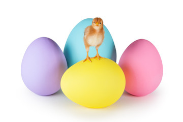 Baby Chicken Standing on Easter Eggs