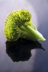 Closeup of a small piece of broccoli on blue background.