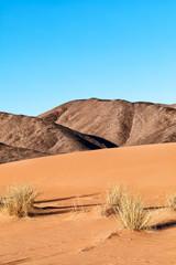 Sahara desert landscape. Focus on foreground desert grass