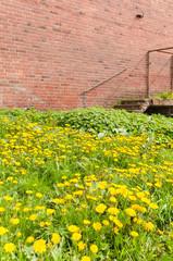 Gartenpflege, verwilderter Garten, plakativ, Blumenwiese