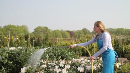 Female worker watering plants