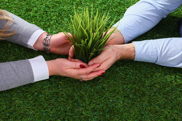 Close-up of businesspeople hands holding plant together