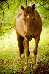 White Marked Brown Horse