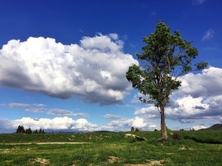 Landscape with one tree on a beautiful day