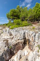 Pine trees on rock in Croatia