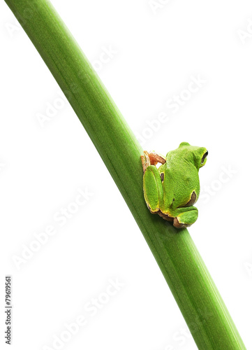 Poster Kikker frog sitting on a leaf