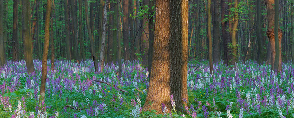 Spring forest with flowers
