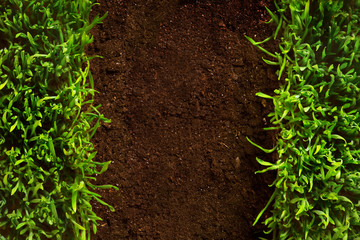 at healthy grass growing in soil pattern