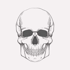 Vector illustration of human skull