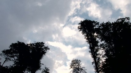 Clouds over Tall Trees