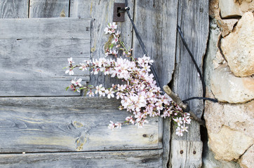flowers, wood and stone