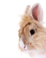 Süsses Kaninchen