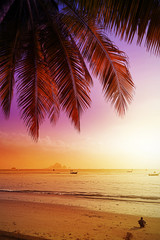 Holiday background made of palm trees silhouettes at sunset.