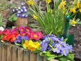 parterre de fleurs printanières