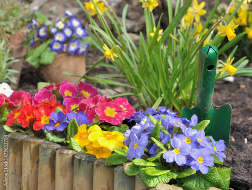 Fotobehang Narcis parterre de fleurs printanières