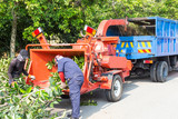 Workers loading tree into the wood chipper to shed - 79635534