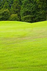 芝生 背景 awna grass plot