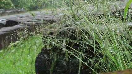 Herbs Waterdrops