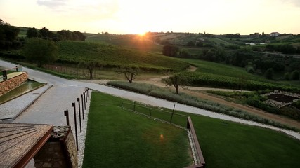 panoramic view of a vineyard at sunset in italy
